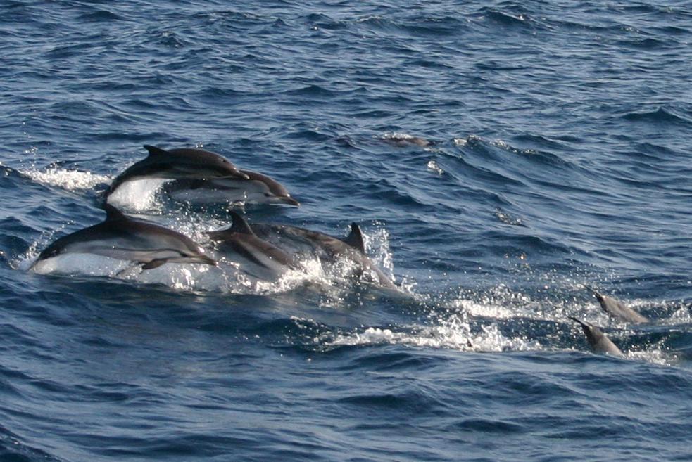 Deux « baleines à bosse » dans la baie d'Algéciras ...