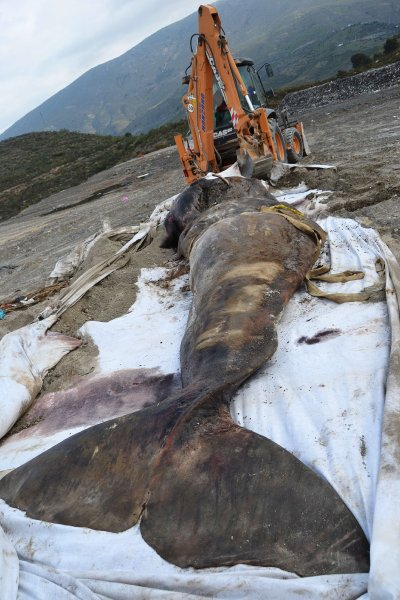 Plastic debris in the ocean - Whales and Dolphins in the ...