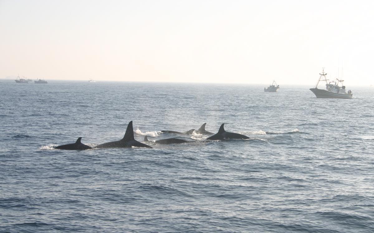 Ballenas encuentran restos de lo que podria ser un Submarino