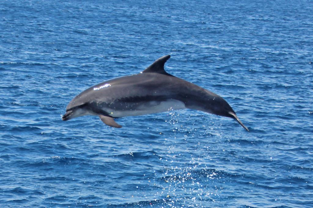 Baby Dolphins Jumping | www.imgkid.com - The Image Kid Has It!