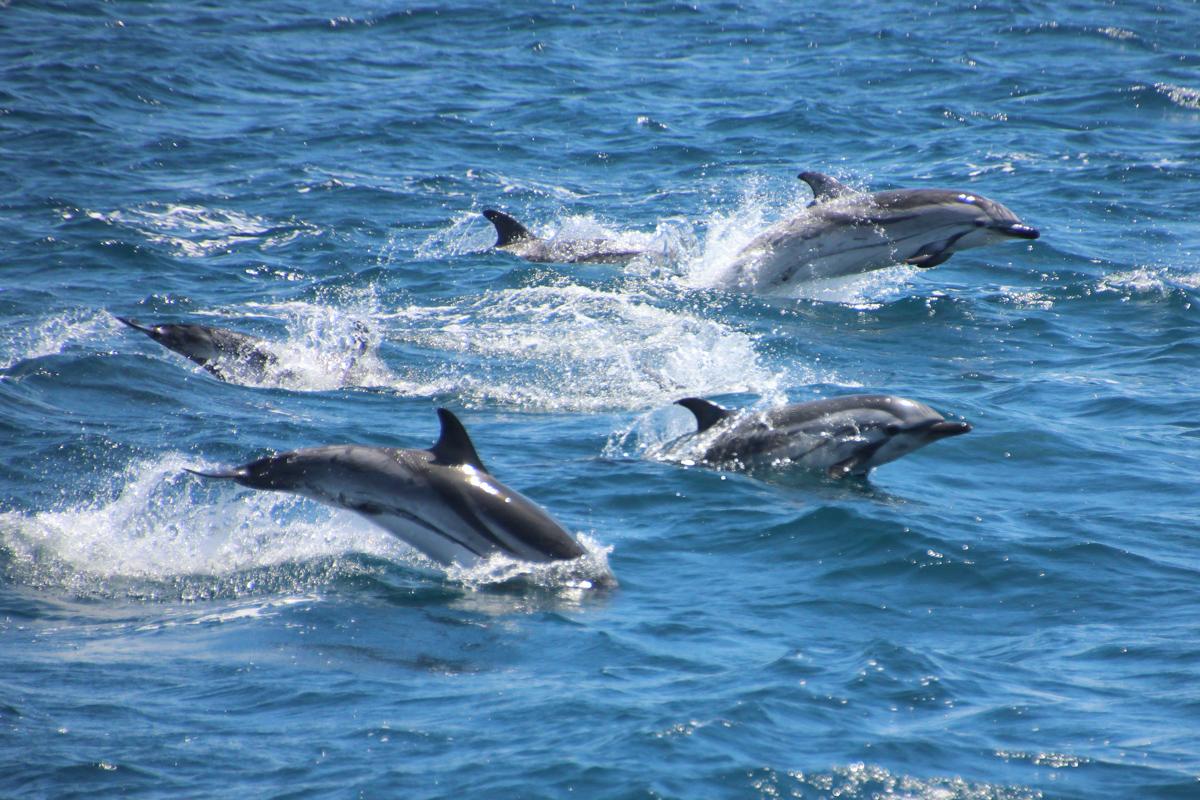 Impressionen des Buches Herzenssache - Wale und Delfine